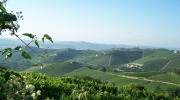 veduta-di-barbaresco-guarene
